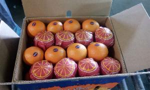 Valencia Orange 07
