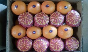 Valencia Orange 08