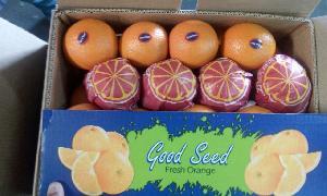 Valencia Orange 09