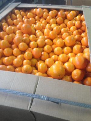 Valencia Orange 15