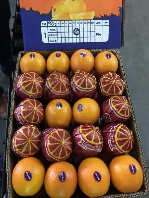 Valencia Orange 17