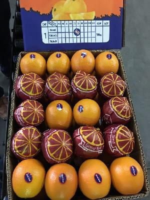 Valencia Orange 18