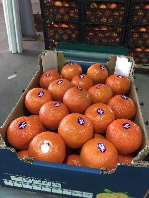 Mandarin Orange 02