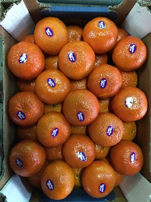 Mandarin Orange 03