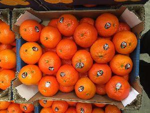 Mandarin Orange 04