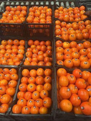 Mandarin Orange 06