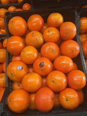 Mandarin Orange 08