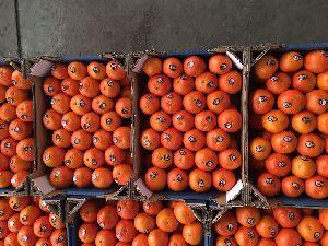 Mandarin Orange 10