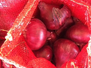 Red Onion 05