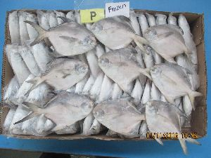 Frozen Silver Pomfret Fish