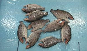 Frozen Tilapia Moon Cut Fish