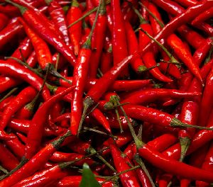 Fresh Red Chilli