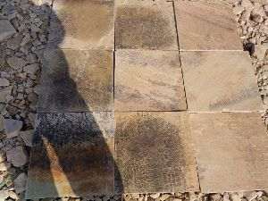 Fossil Mint Sandstone 01