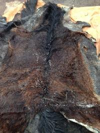Wet & Dry Salted Donkey Hides