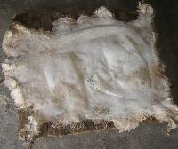 Salted Sheep Skin