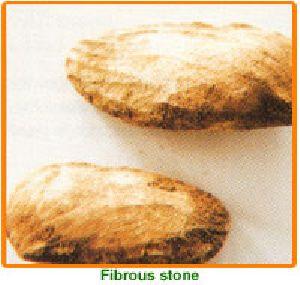 Mangifera Indica Seed 02
