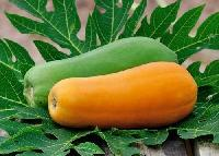 Fresh Papaya Supplier in India