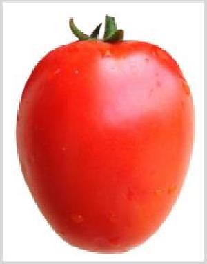 Ashwini Tomato Seeds