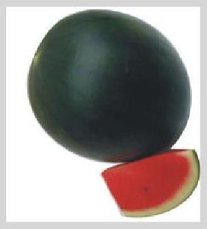 Jarvi-444 Watermelon Seeds