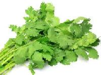 Coriander Leaves Seeds