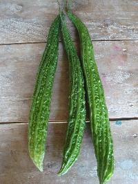 Long Bitter Gourd Seeds