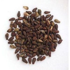 Shivlingi Seeds