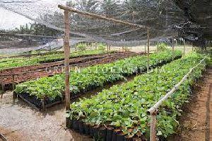 Horticulture Plants