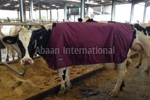 Calf Fleece Blanket 03