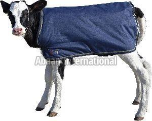 Calf Winter Blanke 02