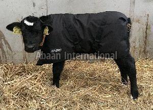 Calf Winter Blanket 05