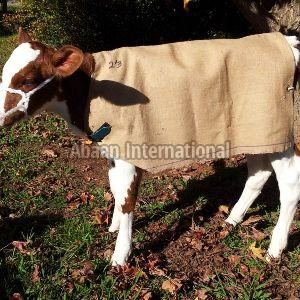 Cow and Calf Canvas Blanket 05