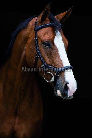 Horse Leather Bridle 01