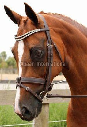 Horse Leather Bridle 06