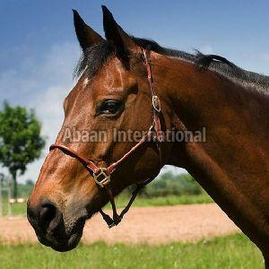 Horse Leather Halter and Head Collar 01