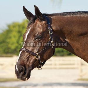 Horse Leather Halter and Head Collar 03