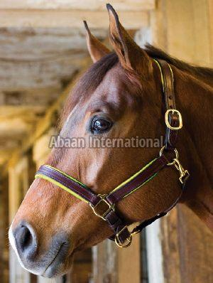Horse Leather Halter and Head Collar 04