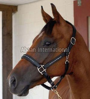 Horse Leather Halter and Head Collar 05