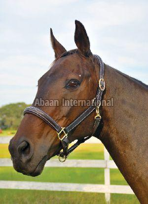 Horse Leather Halter and Head Collar 06