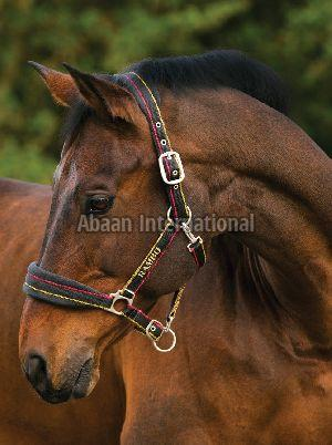 Horse Nylon Halter 09