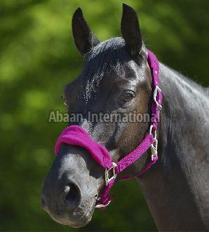 Horse Nylon Halter 10