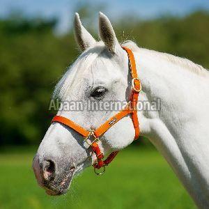 Horse PVC Halter 03
