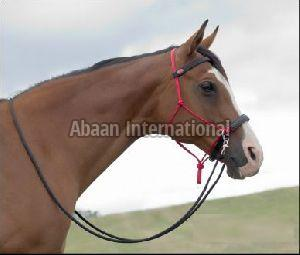 Horse Rope Bridle 09