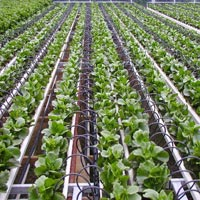 Agriculture Solutions
