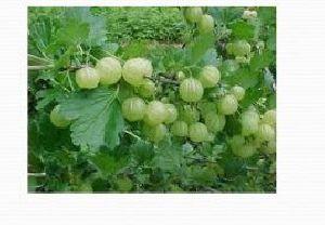 Herbal Farming 03