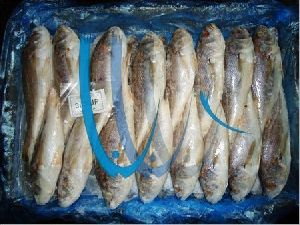 Frozen Silver Croaker Fish