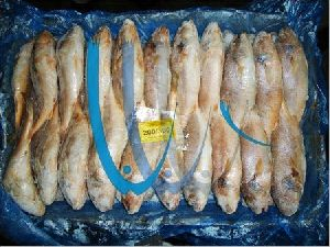 Frozen Croaker Fish 01