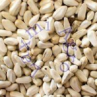 American Saffron Seeds