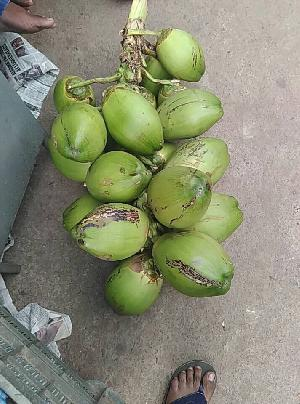 Fresh Coconut 02