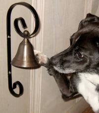Pet Bell