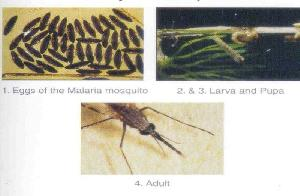 Mosquito Management & Control Services